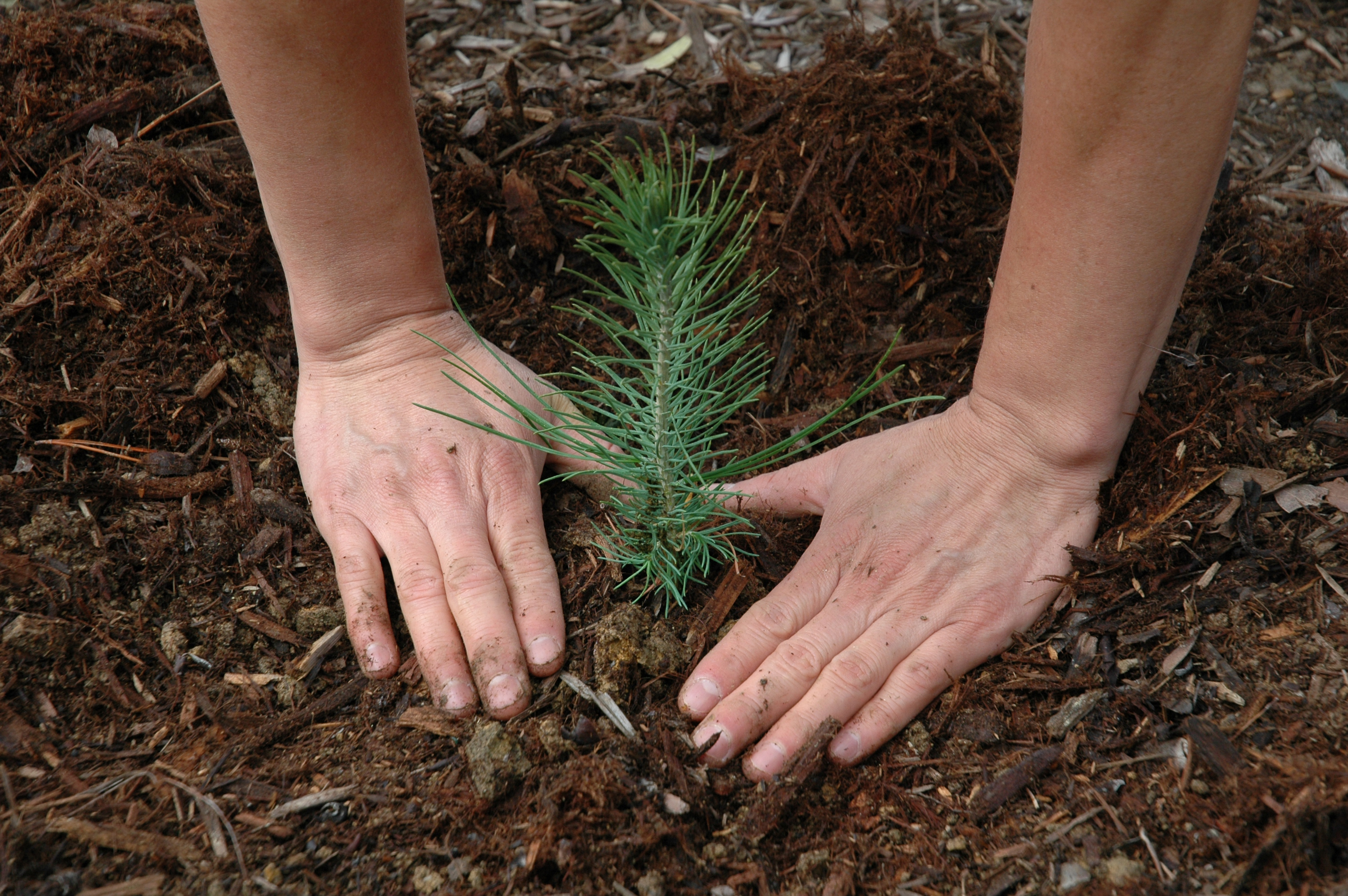 Tree Being Planted