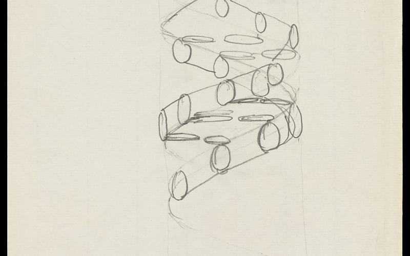 A tan piece of paper with a pencil drawing of part of a double helix shape, comprised of lines and circles