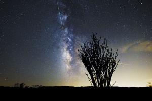Perseid Meteor Shower over the Ocotillo Patch, Joshua Tree